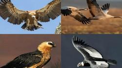 """10 loài chim bay cao nhất, """"đua"""" cả với máy bay"""