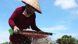 Dân biển Cà Mau tranh thủ kiếm bộn tiền, nhờ nghề đẩy te bắt ruốc