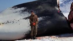 Mỹ: Bị dọa giết vì săn cá voi dài 17m cho cả làng ăn