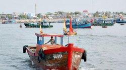 """Liên tục """"trúng"""" biển, ngư dân Bình Châu lãi 150 triệu/chuyến"""