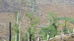 Đắk Nông: Khởi tố nguyên giám đốc công ty lâm nghiệp để mất rừng