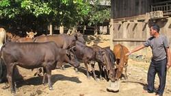 Thông qua Hội Nông dân, nông dân cả nước vay 52.850 tỷ đồng vốn ưu đãi