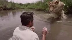 """""""Đứng tim"""" xem sư tử chạy đến ôm chầm người đàn ông"""