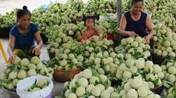 Na dai Lục Nam được giá, nông dân bỏ túi hàng trăm tỉ