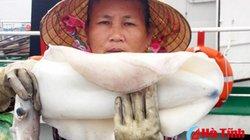 Được mùa mực tươi rói, ngư dân Hà Tĩnh thu hàng chục tỷ đồng