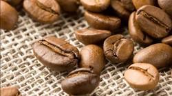"""Giá nông sản hôm nay 28.9: Giá cà phê tăng gần 30%, tiêu """"thất thủ"""""""