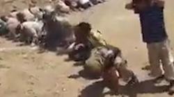 Hàng  trăm khủng bố IS quỳ gối đầu hàng ở giữa sa mạc