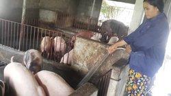 """Giá lợn hôm nay 6.9: Thực hư thông tin Trung Quốc """"mở biên"""" mua lợn"""