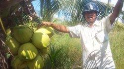 Làm giàu ở nông thôn: Trồng 700 cây dừa 2 tuổi, thu 15 triệu/tháng