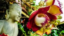 Ngắm loài hoa Hàm Rồng an yên chỉ trồng ở chốn linh thiêng