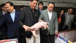 Bản lĩnh cầm lái của ông Giám đốc Hợp tác xã nuôi lợn...tự động