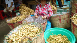 Thương lái không chọn trái cây VietGAP, thực sự họ mua gì?