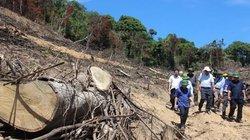 Vụ phá rừng quy mô lớn ở Bình Định: Tạm đình chỉ hàng loạt kiểm lâm