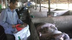 Giá lợn hôm nay 29.9: Không lên nổi 35.000 đ/kg, thua lỗ nặng, dân chán lợn bỏ bê, dịch LMLM bùng phát