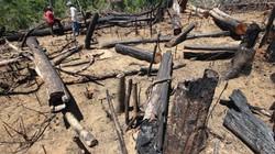 """Vụ phá rừng phòng hộ ở Quảng Nam: Xử lý nghiêm những ai """"bảo kê"""""""