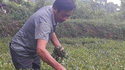 Mặc kệ cười chê, lão nông tự chế máy hút sâu, trồng chè hữu cơ