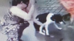 Nóng 24h qua: Chủ nói lý do chặt chân chó gây xôn xao mạng xã hội