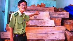 Cận cảnh lô gỗ lậu nghi do lâm tặc phá rừng táo tợn tại Bình Định
