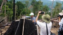 Bắt tạm giam đối tượng phá rừng phòng hộ ở Quảng Nam