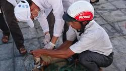 600 tỷ đồng chi cho tiêm phòng dại do bị chó mèo cắn mỗi năm