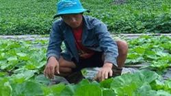 """Làm giàu ở nông thôn: """"Hot boy"""" làm vườn rau 200 triệu xanh đến """"phát hờn"""""""
