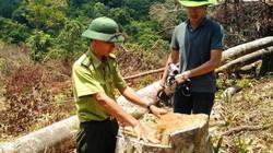Bình Định: Huyện để phá rừng quy mô lớn sắp có trạm kiểm lâm tiền tỷ