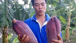 """""""Độc chiêu"""" trồng chuối tây Thái Lan bán cả lá, hoa, quả"""