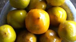 Hồng không hạt trăm tuổi Bắc Kạn ngon nổi tiếng vào mùa thu hoạch