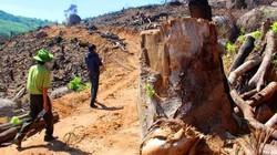 Hơn 60ha rừng biến mất ở Bình Định: Phải tìm được kẻ chủ mưu