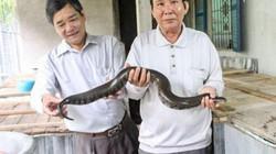 Lạ mà hay: Nuôi đàn rắn bự trong thùng gỗ, bán 3 triệu đồng/cặp