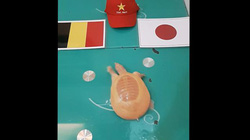 Nhận định Bỉ vs Nhật Bản: Rùa vàng Hà Nội chọn đội nào?