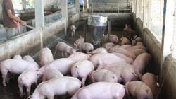 Nắng nóng kỷ lục 40 độ: Mất điện, nông dân nuôi lợn lo sốt vó