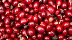 Giá nông sản hôm nay 3/7: Giá cà phê giảm liên tiếp, giá tiêu thấp, nông dân hồ tiêu thất thủ
