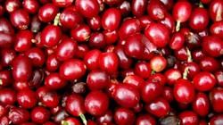 Giá nông sản hôm nay 6/7: Giá cà phê, tiêu chao đảo, đồng loạt giảm 1 triệu đồng/tấn