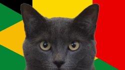 Mèo tiên tri Cass dự đoán kết quả Brazil vs Bỉ: Có cú sốc?