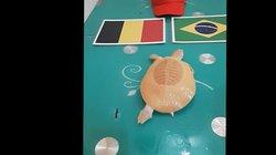 Nhận định Brazil vs Bỉ: Rùa vàng Hà Nội chọn Brazil?