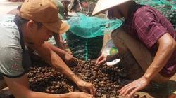 Ninh Bình: Những phận đời vật vã mưu sinh dưới nắng nóng 40ºC