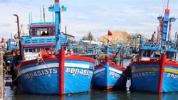 Để xảy ra sai sót, Ban quản lý cảng cá Quy Nhơn bị kiểm điểm