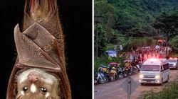 Cứu đội bóng Thái Lan: Mối đe dọa lớn đang ở ngay trong hang