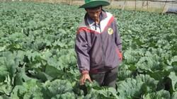 Vườn chỉ trồng ớt ngọt, bắp sú, cà chua thôi mà lời 1,2 tỷ đồng/năm