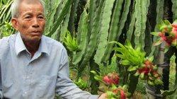 """U70 chỉ có 1,2 công vườn mà mỗi năm """"bỏ ống"""" 250 triệu đồng"""
