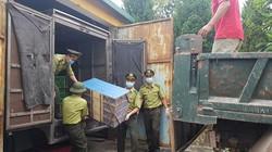 Quảng Ninh: Thu giữ, tiêu hủy hơn 1.000 con chim sâm cầm nhập lậu