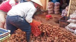 Khoai tây Trung Quốc hoành hoành, Lâm Đồng chi tiền bảo vệ thương hiệu