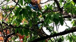 Hơn một giờ giải cứu cô gái 'ngáo đá' la hét trên cây