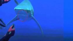 Thợ lặn liều mạng thò tay vào hàm răng sắc nhọn của cá mập để... gỡ lưỡi câu