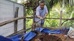 Hậu Giang: Vườn dừa xanh tốt, sai lúc lỉu nhờ rơm rạ