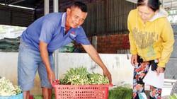 """Làng Chăm trồng """"rau vua"""" giữa vùng nắng hạn, nhà nhà khấm khá"""