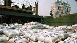 Japonica lại vi vu Hàn Quốc, giá gạo hạt trắng có xu hướng giảm