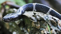Mua rắn độc online, cô gái Trung Quốc nhận bài học đau đớn