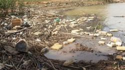 Nhức nhối rác thải nông nghiệp bao vây thành phố hoa
